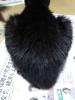 20160906-Cat.JPG
