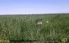 草原のISISちゃん - ISIS chan runs grassland (373).gif