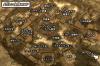 megaton_map.jpg