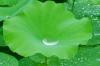 green-leaves_beiz.jp_S03653.jpg